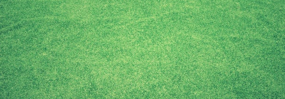 Quand semer la pelouse et le gazon dans votre jardin ?