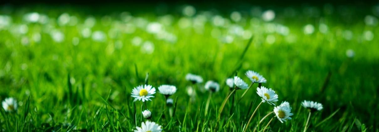 Que faire dans son jardin au mois de mars ?